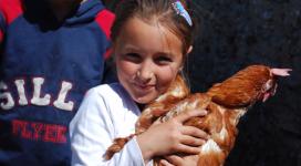 Găini ouătoare pentru familii nevoiaşe
